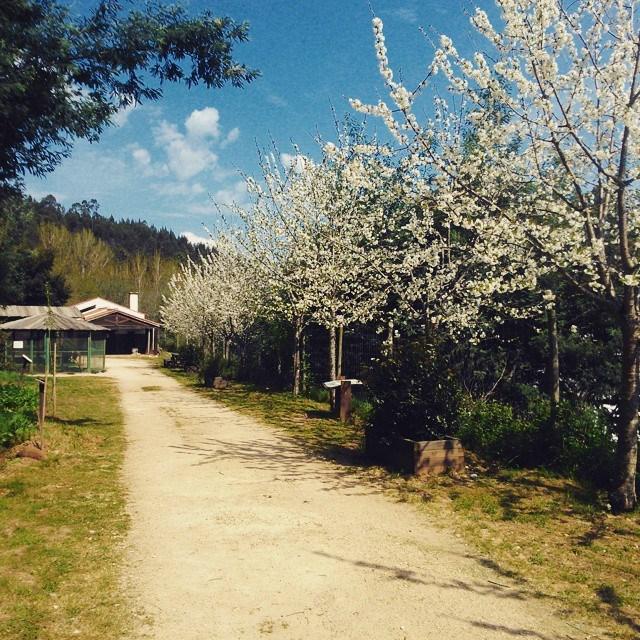 A Primavera chegou em força ao Parque Biológico da Serra da Lousã