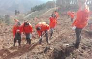 Voluntários unidos na reflorestação de Cepos e Teixeira